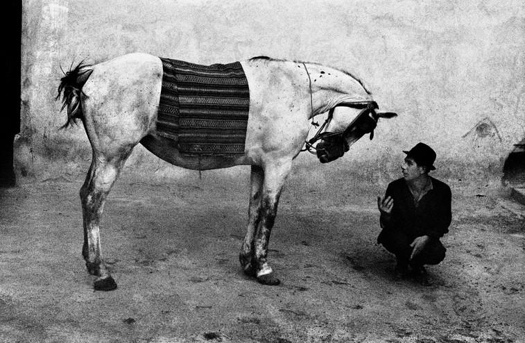 Kůň a muž